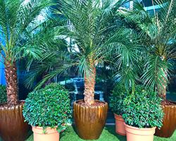 plant-rentals-plantscapes