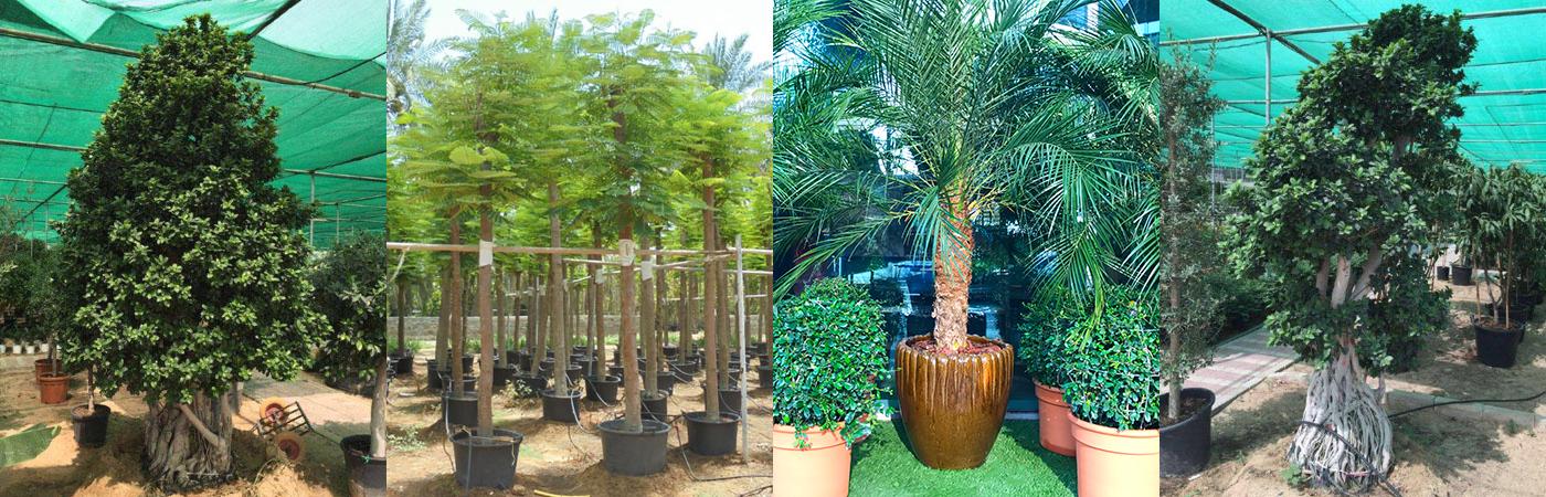 plant-rental-plantscapes