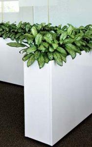 hospitality-plants