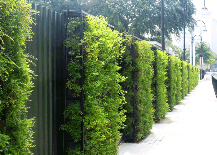 outdoor-green-wall-plantscapes