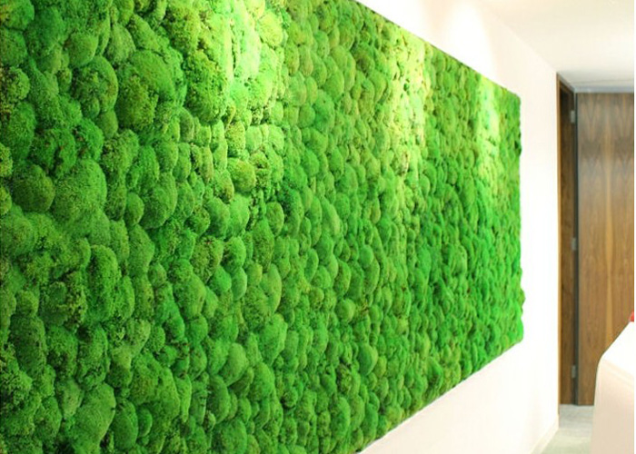 moss wall plantscapes