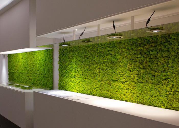 moss-wall-plantscapes