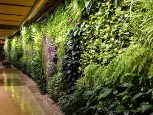 green wall construction plantscapes