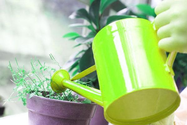 plant-maintenance