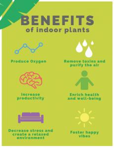 Benefits of Indoor Plants 1