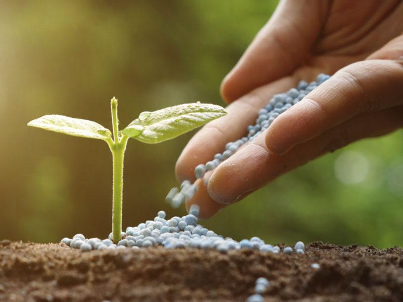 fertilizers-plantscapes