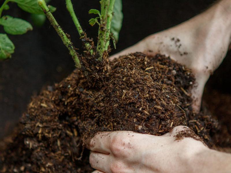 potting-soil-plantscapes