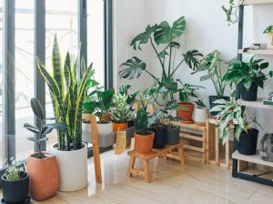 potted green indoor plants 3076899 1170x792 1