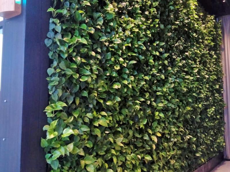Avada-green-wall